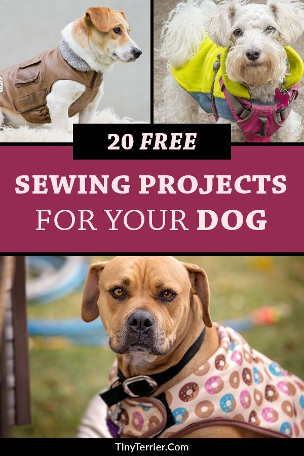 20 Free Sewing Projects for Dogs | DIY Dog Sewing Patterns & Tutorials