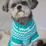 Free Crochet Dog Sweater Patterns Crochet Dog Sweater Patterns To Try Out Cottageartcreations - vanessaharding.com